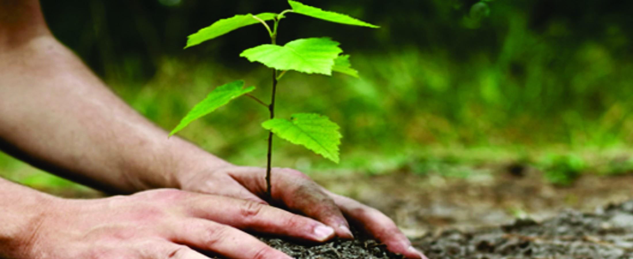 Elaboração e Execução de Projetos de Reflorestamento