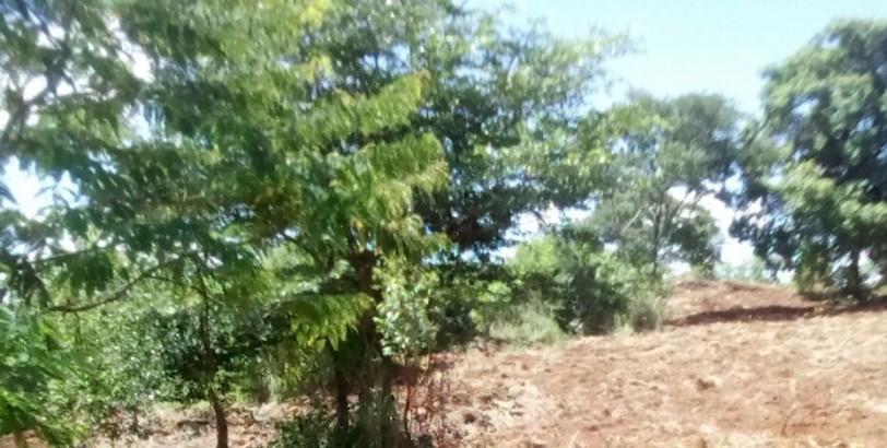 Recitec - Reflorestamento executado em Crixas - GO
